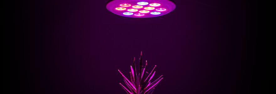 lampe à LED horticole